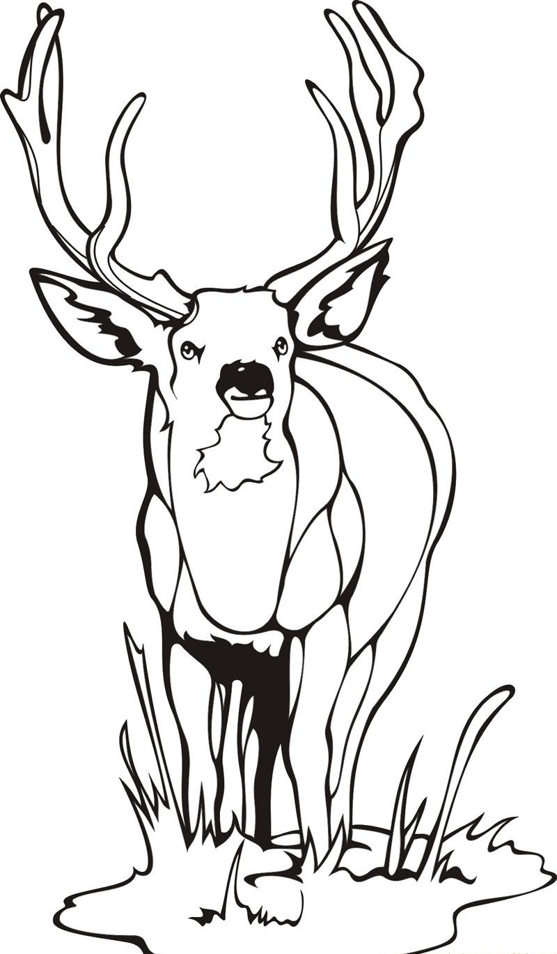 The gruffalo colouring pages to print - Printable Deer Coloring Pages
