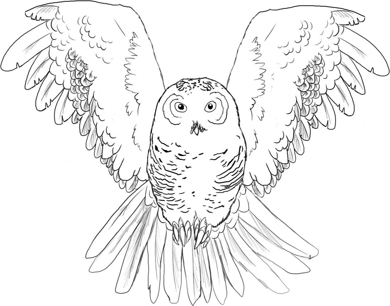 Harry potter owls flying coloring pages for Draw the owl