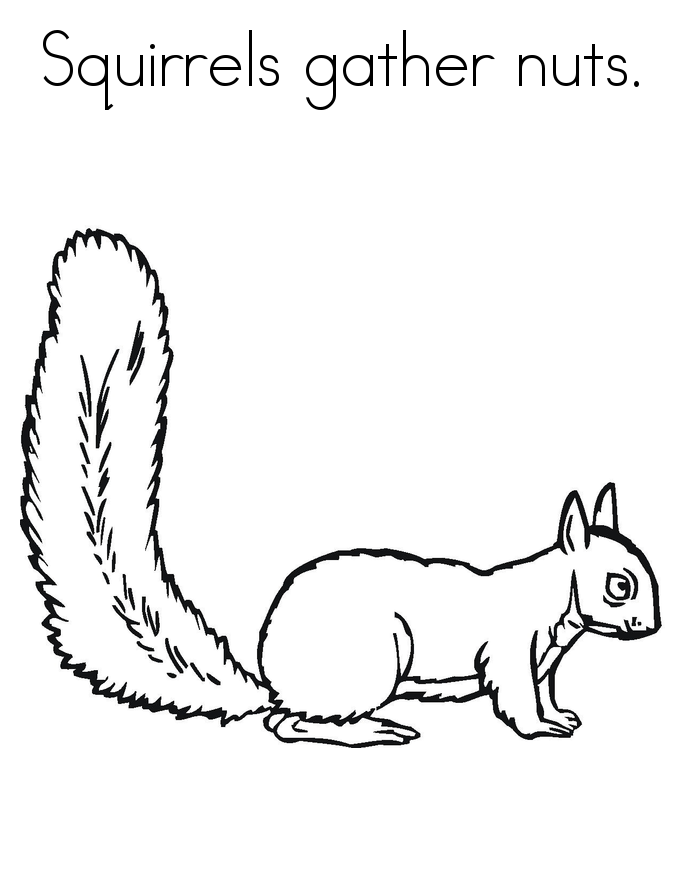 Printable for Kids Squirrel Coloring Pages