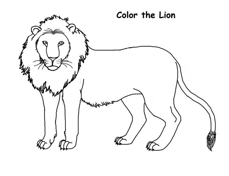 Real Lion Coloring Pages