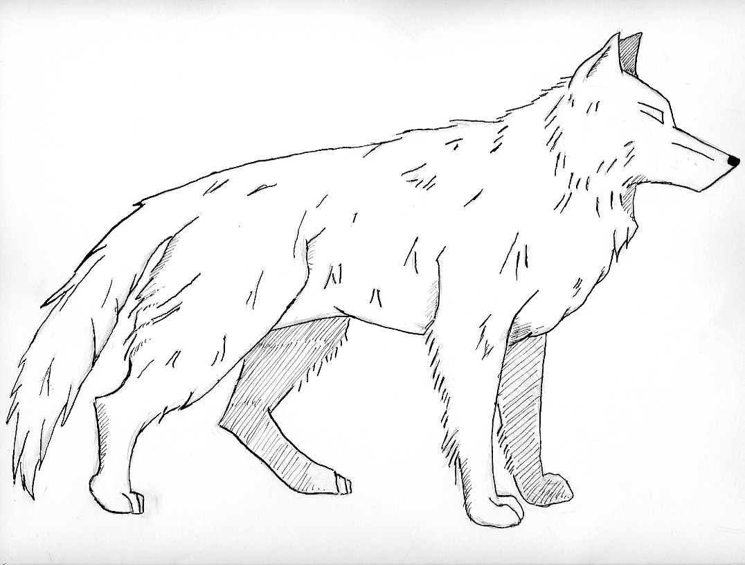 Free coloring pages realistic animals - Realistic Wolf Coloring Pages