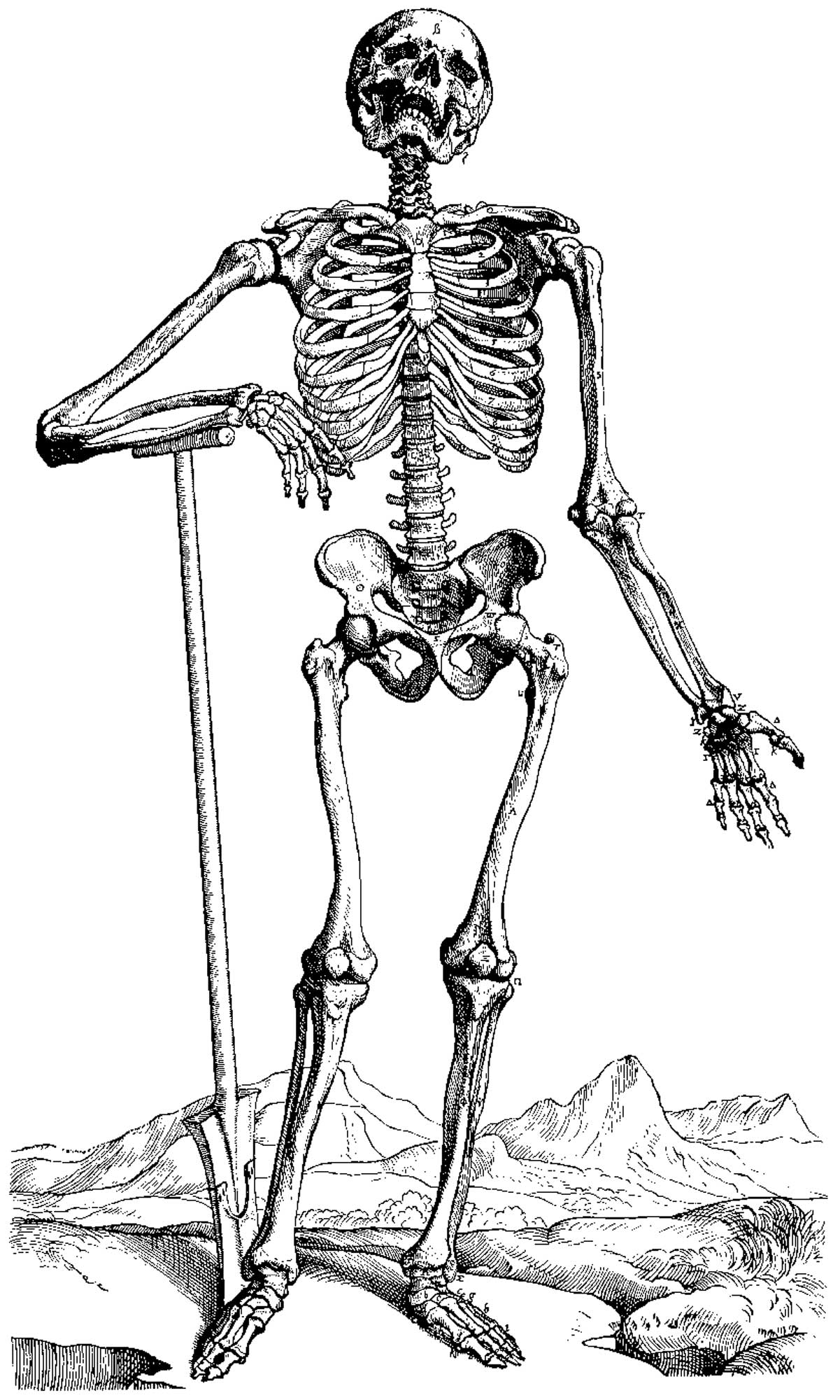 anotomical skeleton coloring pages - photo#33