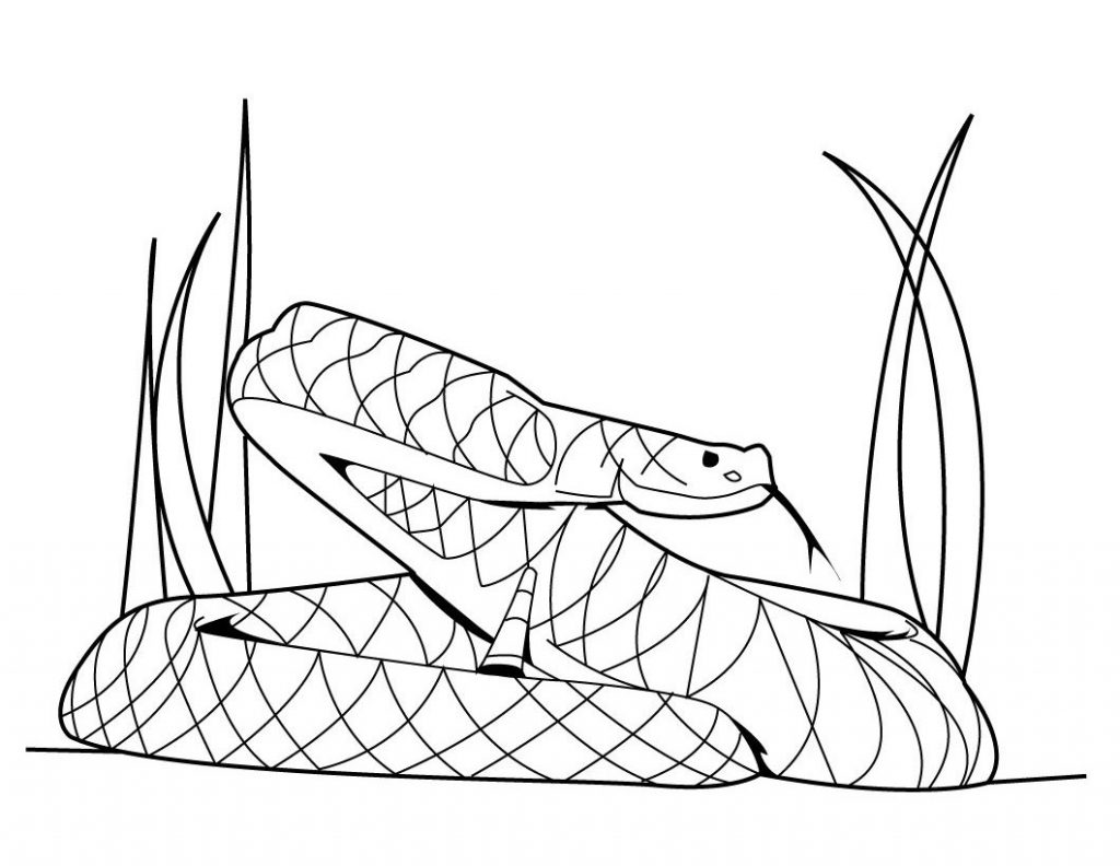 Snake Coloring Sheets Contemporary Inside
