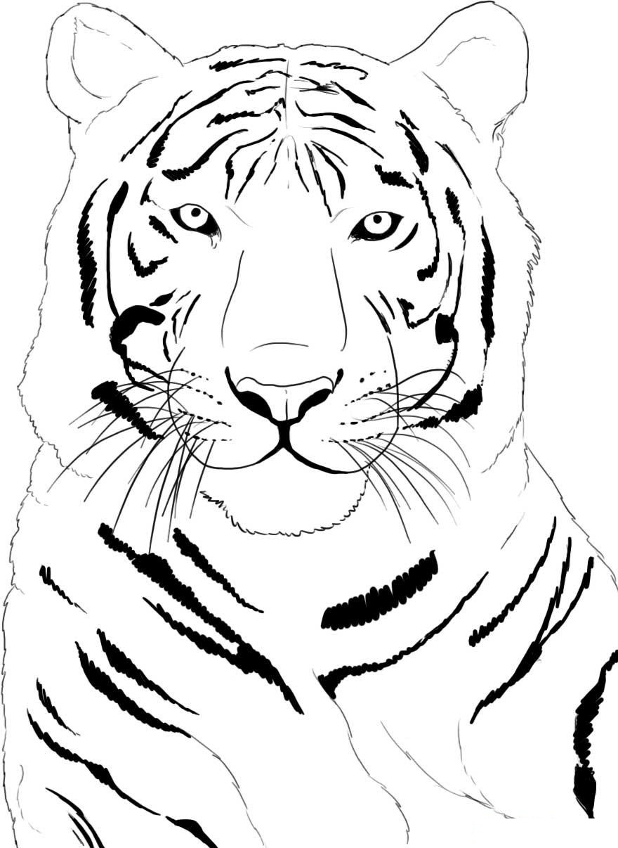 coloring pages of white tigers - photo#24
