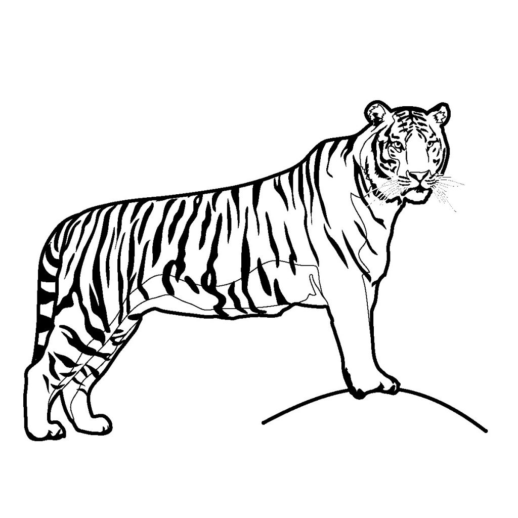 Free Printable Tiger Coloring Pages
