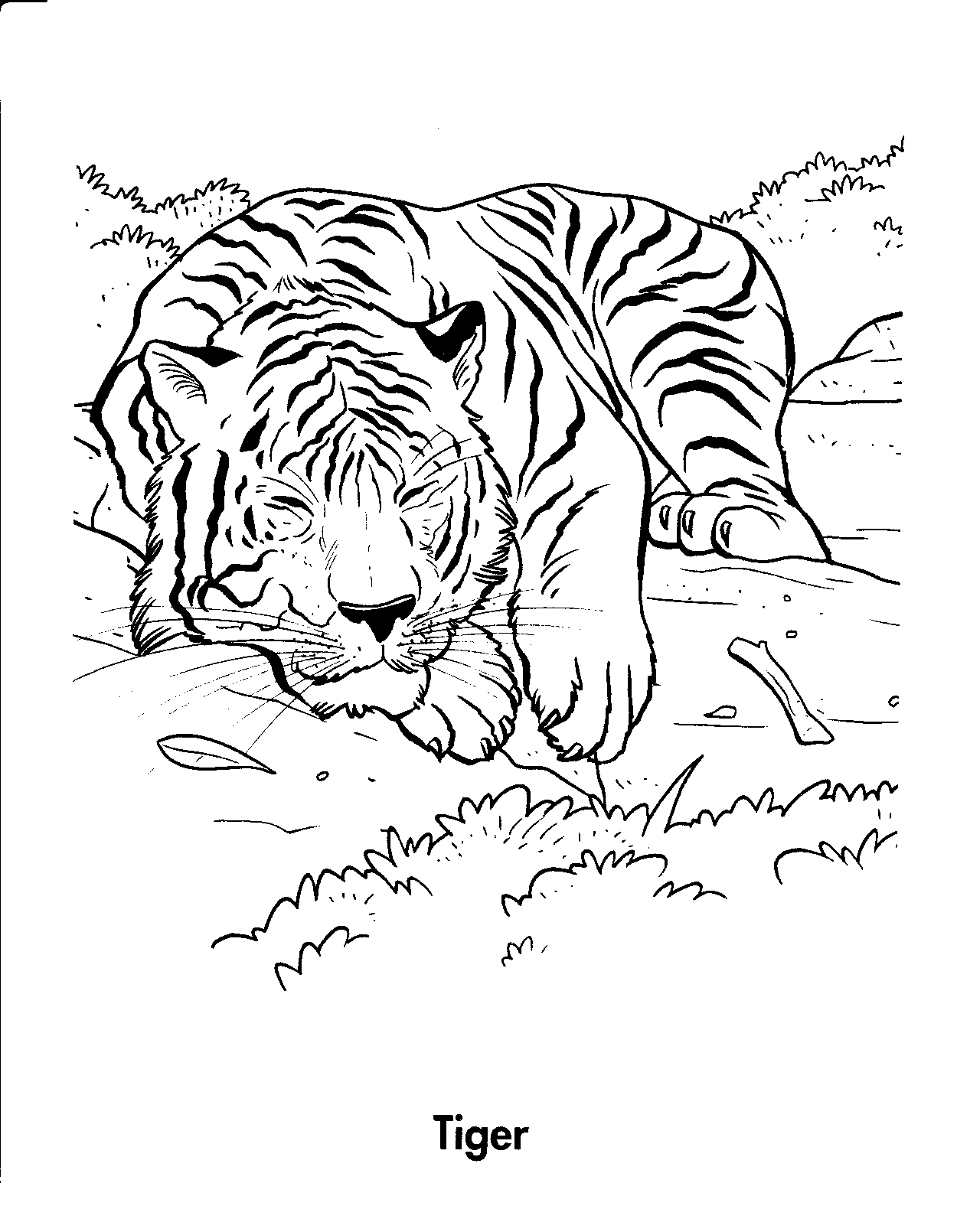 Free coloring pages tiger - Tiger Printable Coloring Pages