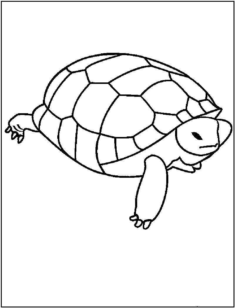 Free Printable Turtle Coloring Pages For Kids Coloring Page Of Turtle