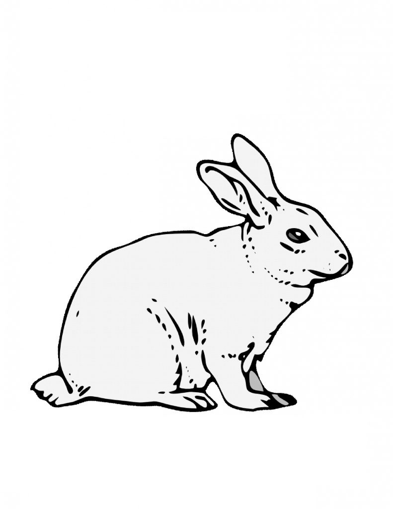 Free Printable Rabbit Coloring