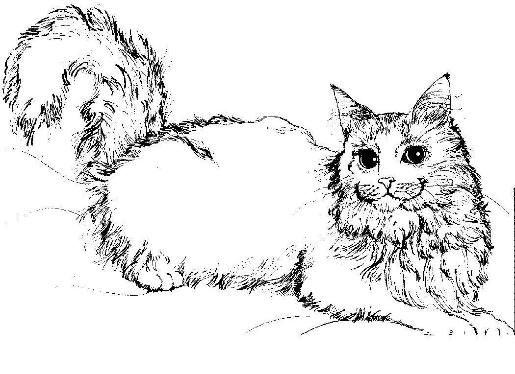 coloring pages of animals cats - photo#34