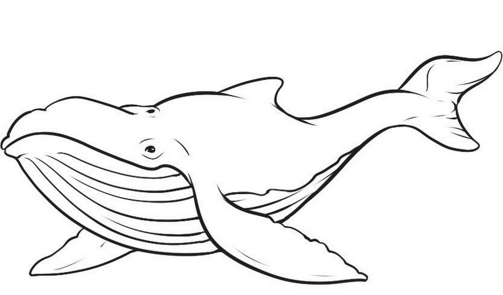 whale coloring book pages - photo#1