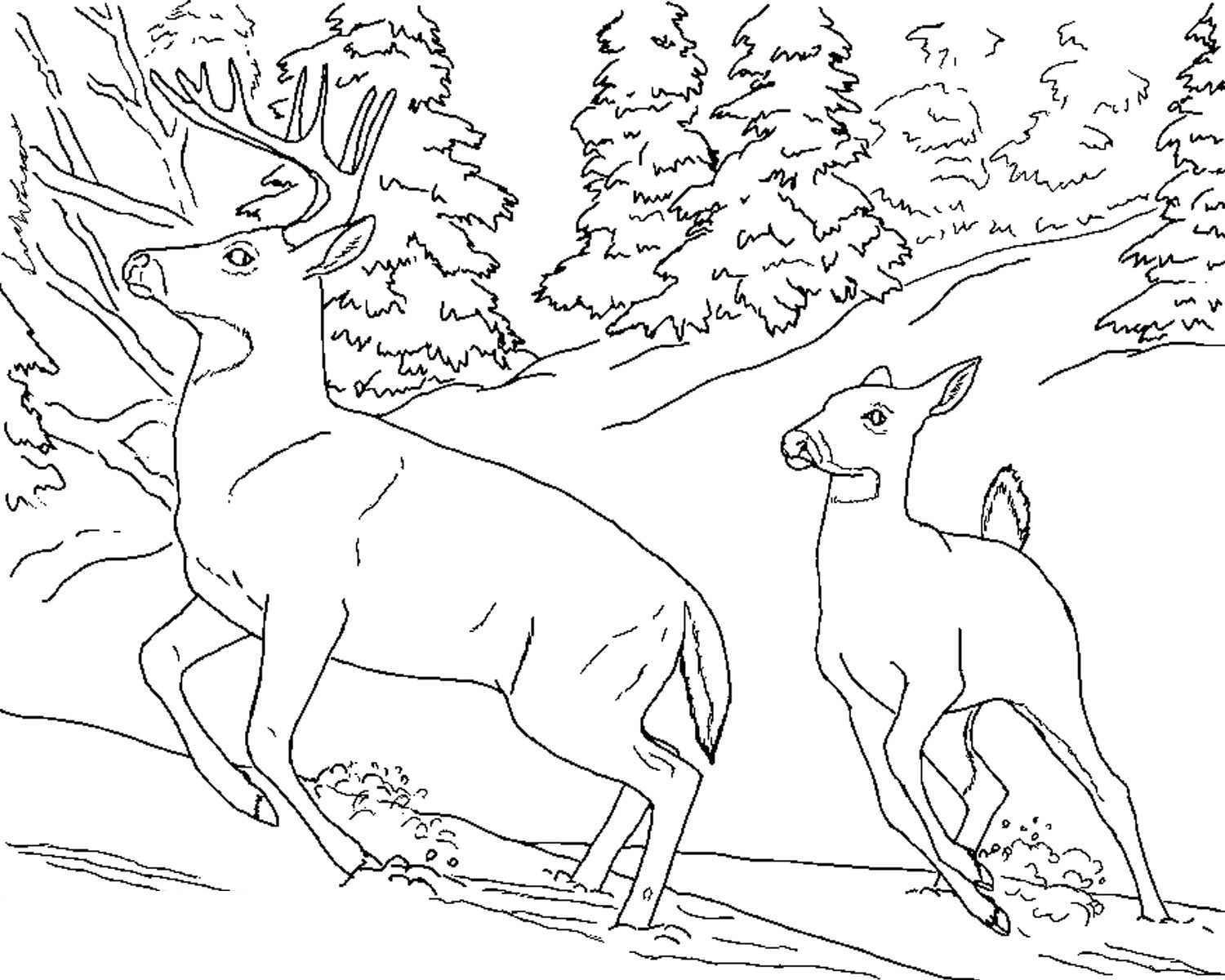 Drawing pages of nature - White Tailed Deer Coloring Pages