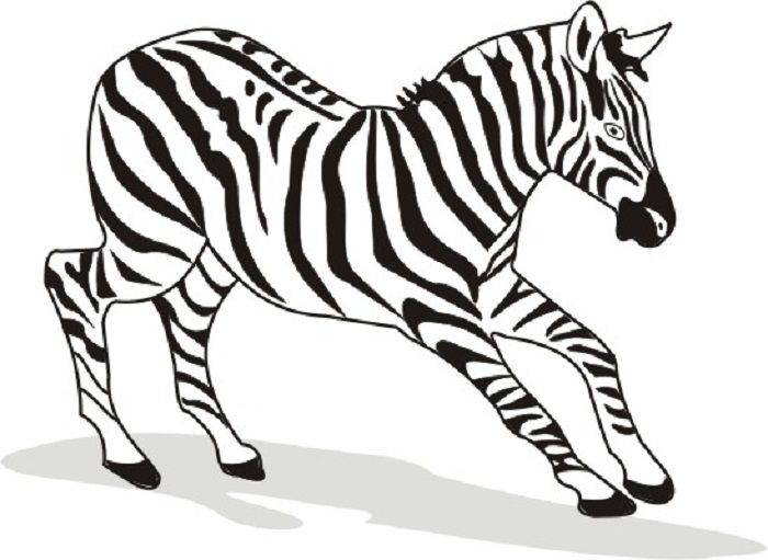 zebra coloring pages free - photo #20