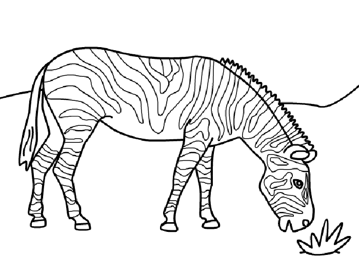 zebra coloring pages without stripes - photo #25