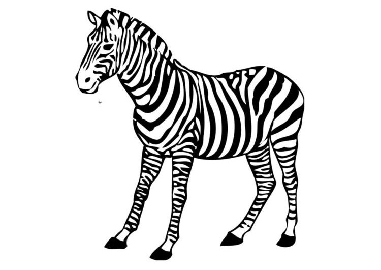 zebra coloring pages free - photo #7