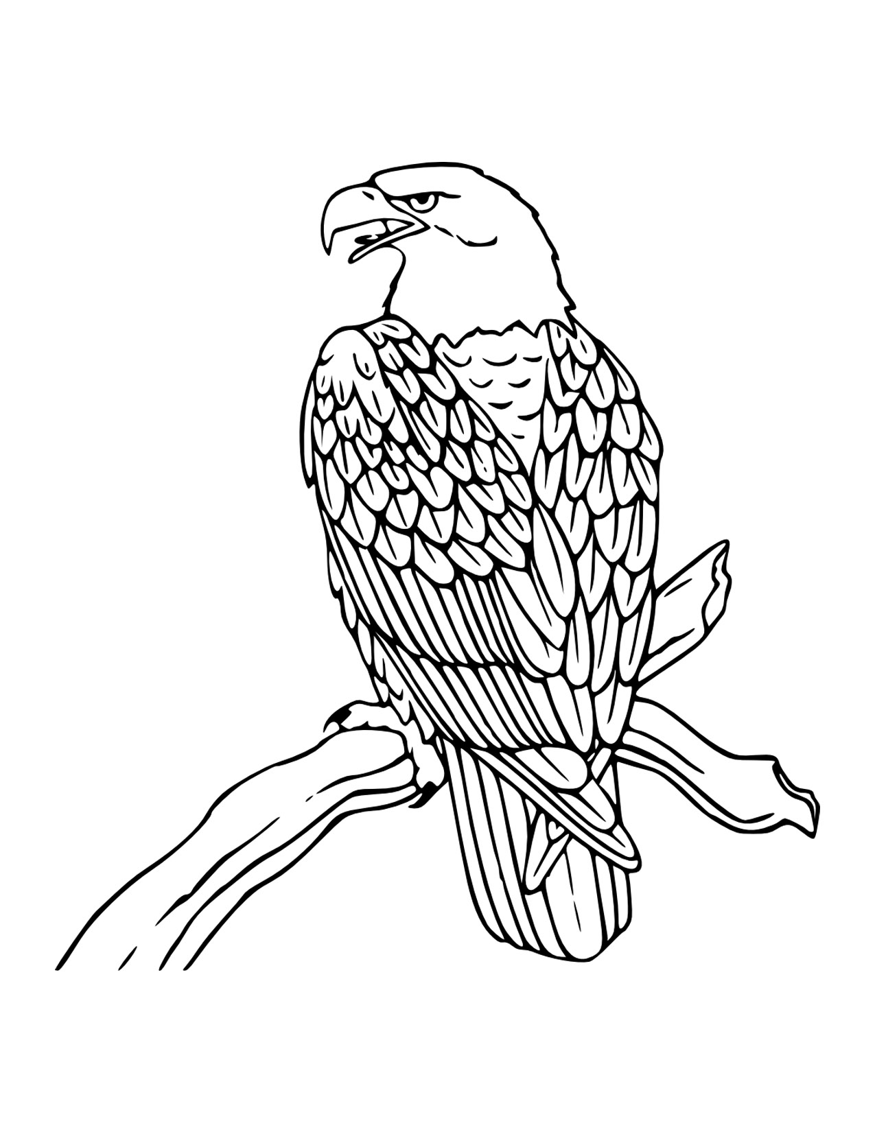 bald eagle coloring pages for kids - American Bald Eagle Coloring Page