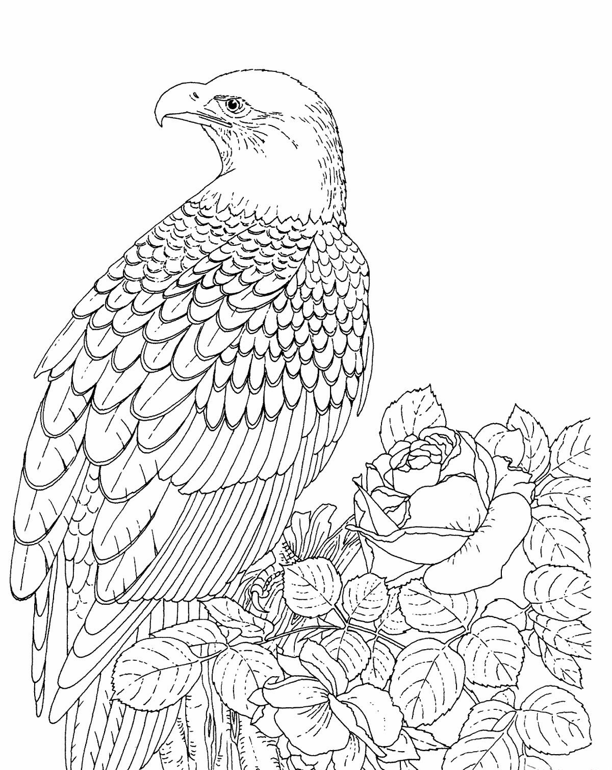 bald eagle coloring pages free printable - American Bald Eagle Coloring Page