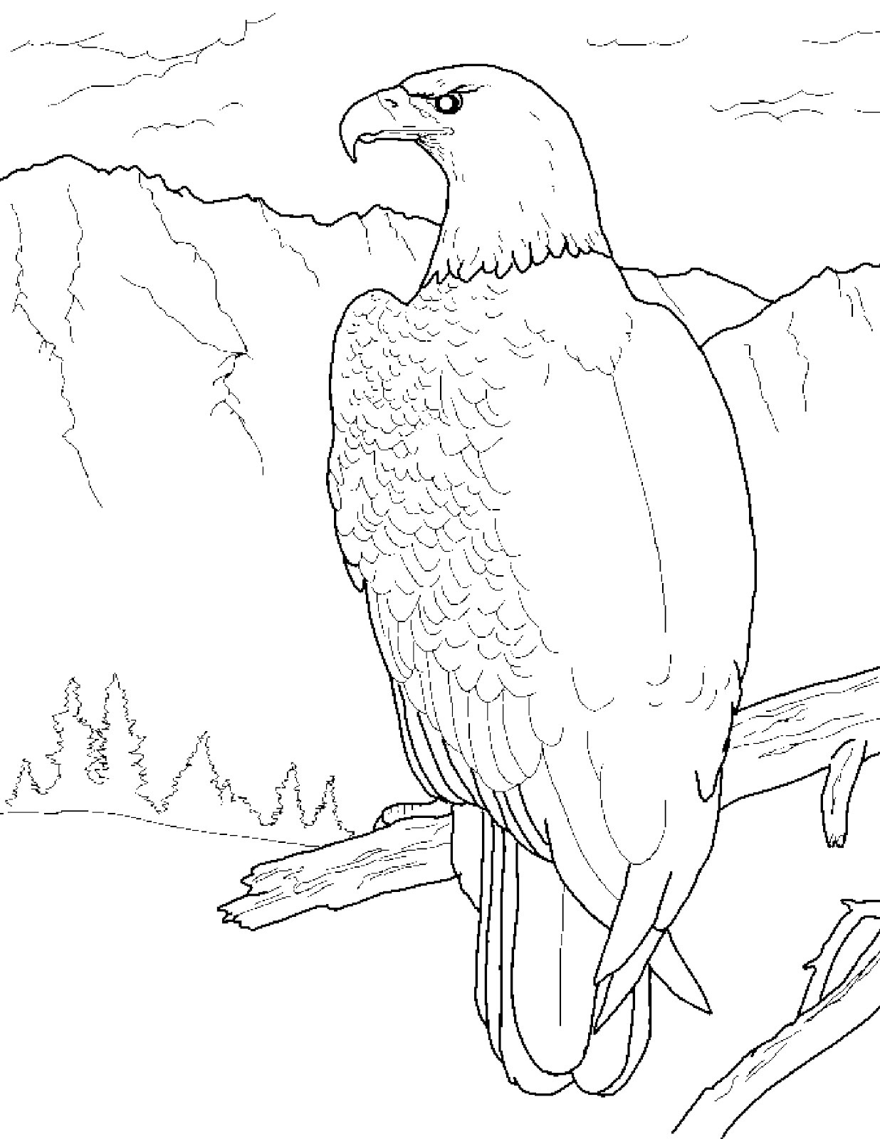 bald eagle coloring pages - American Bald Eagle Coloring Page