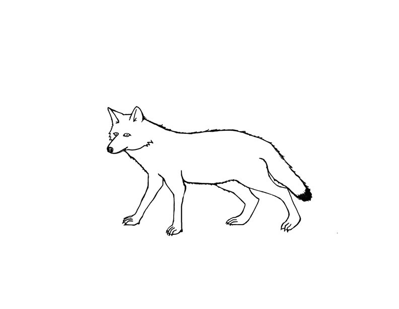 coyote pictures coloring pages - photo#29