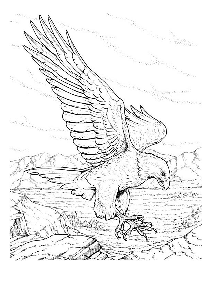 free printable bald eagle coloring pages - American Bald Eagle Coloring Page