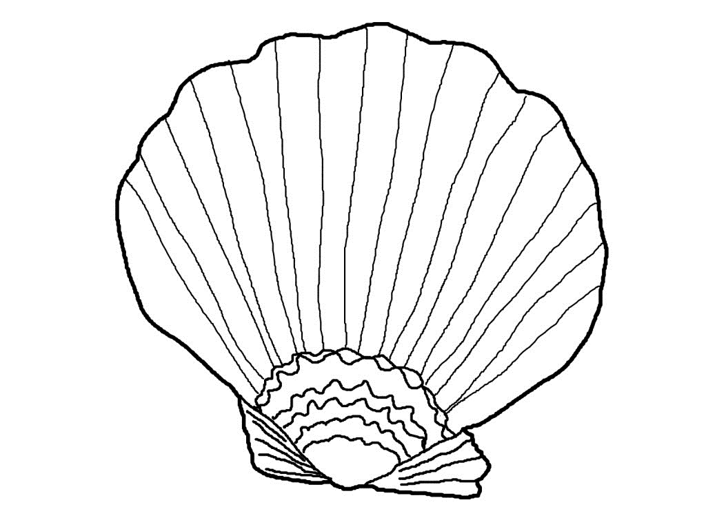Clam Coloring Pages For Toddlers