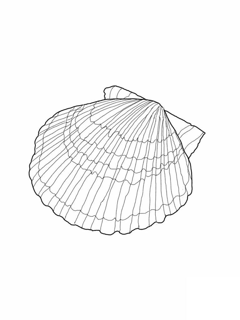 coloring pages of sea shell - photo#43