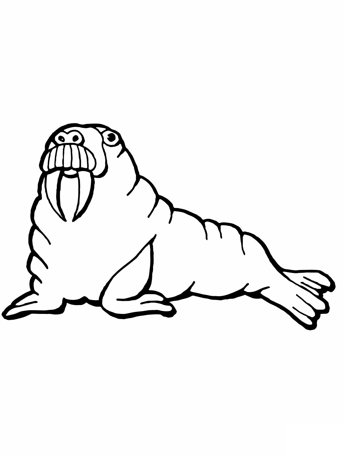 Free Printable Walrus Coloring