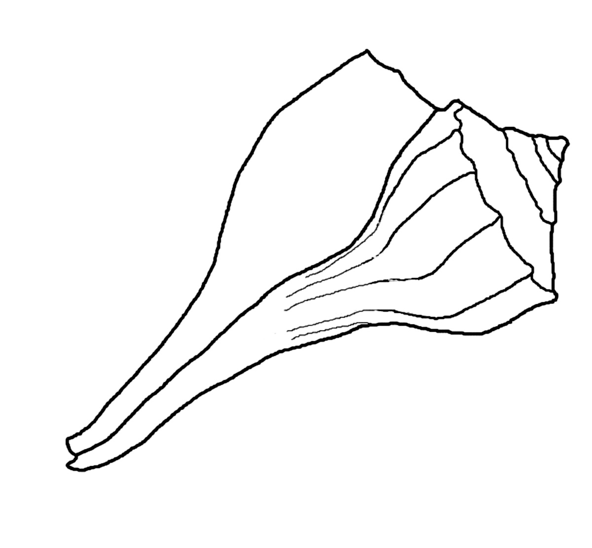 seashell coloring pages to print | Free Printable Seashell Coloring Pages For Kids