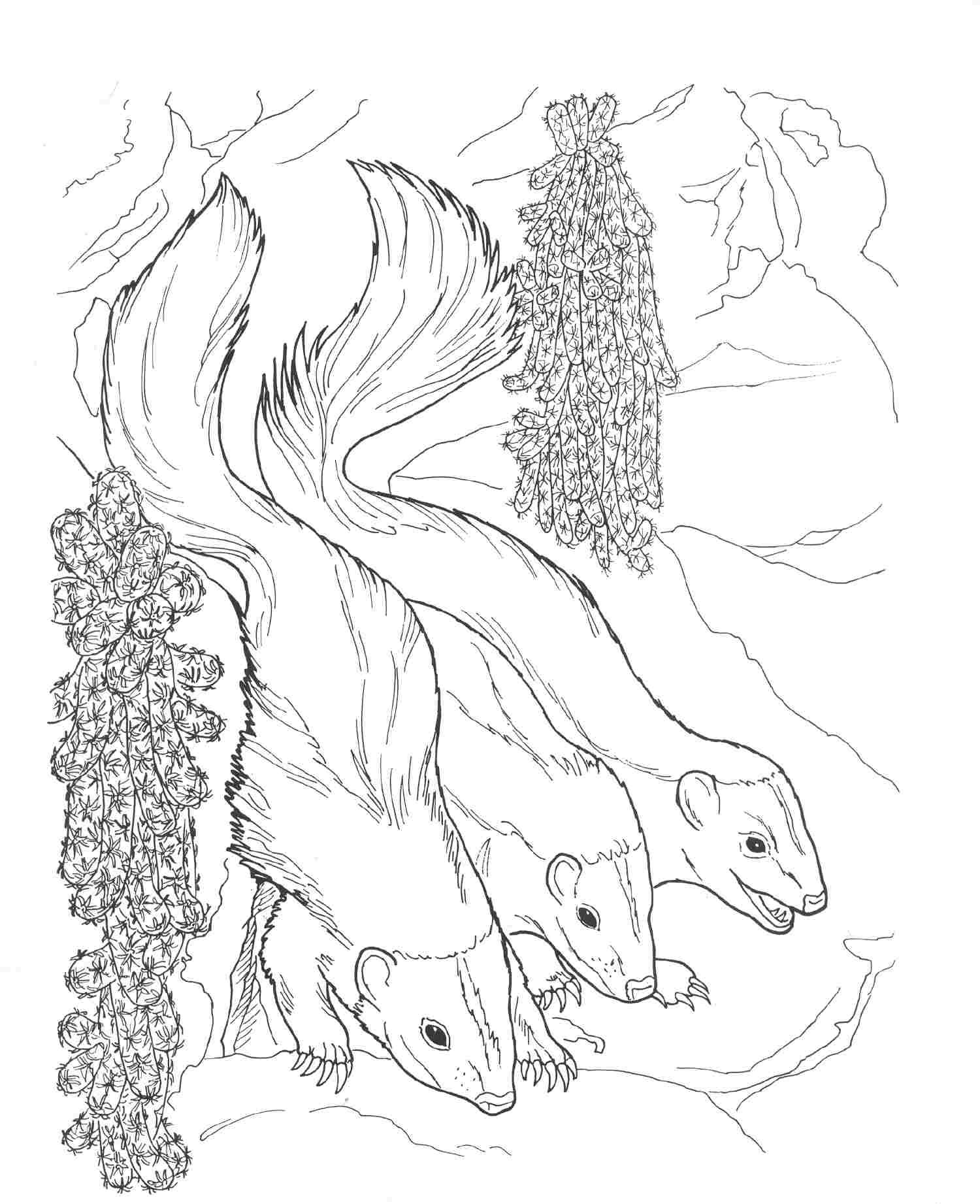 skunk coloring pages - photo#25