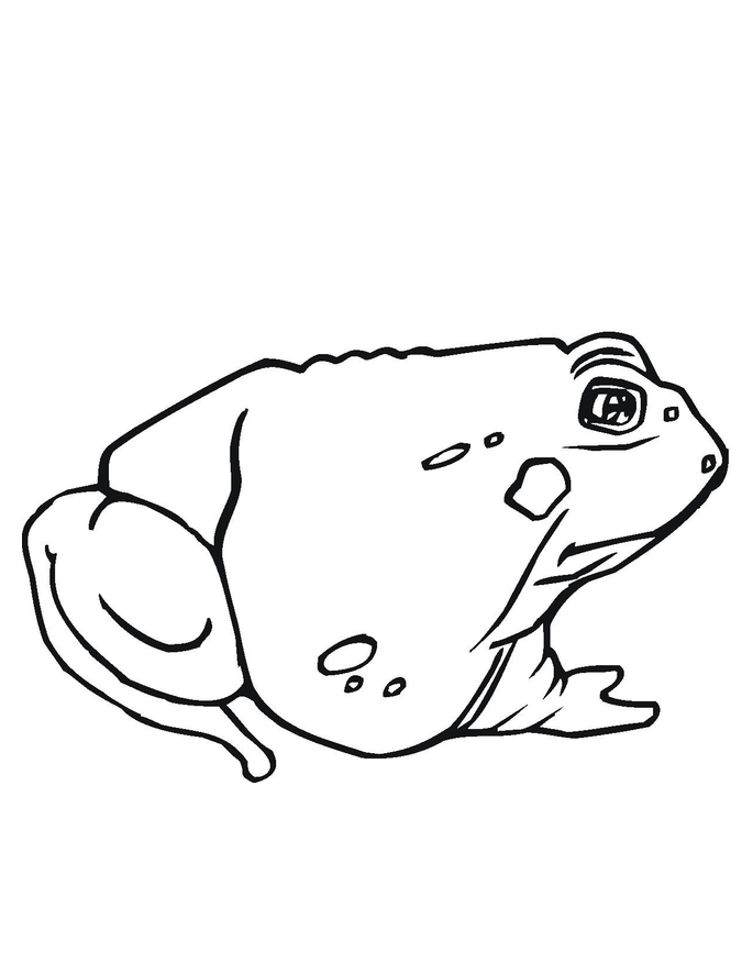 toad coloring pages - photo #13