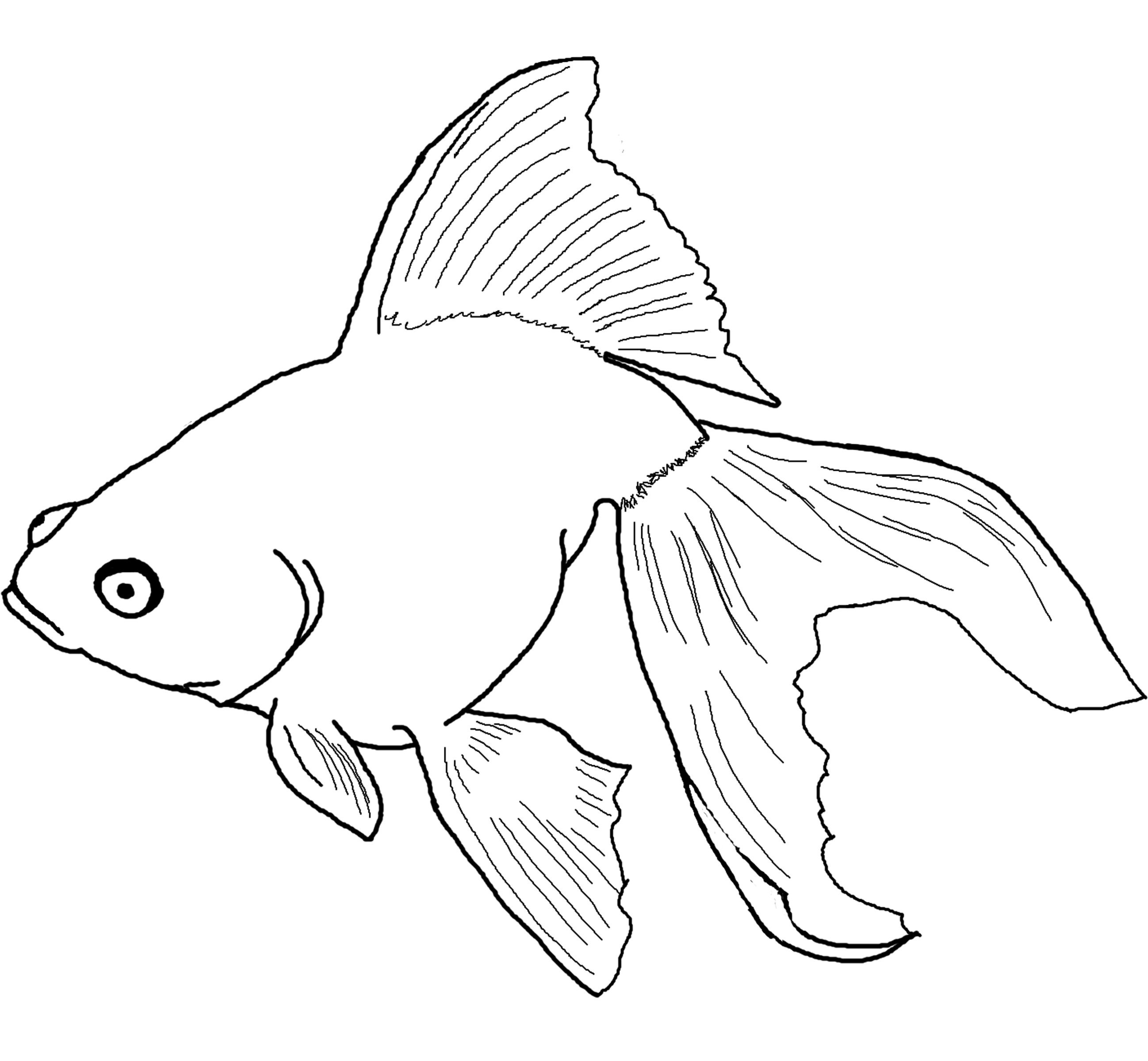 goldfish coloring pages