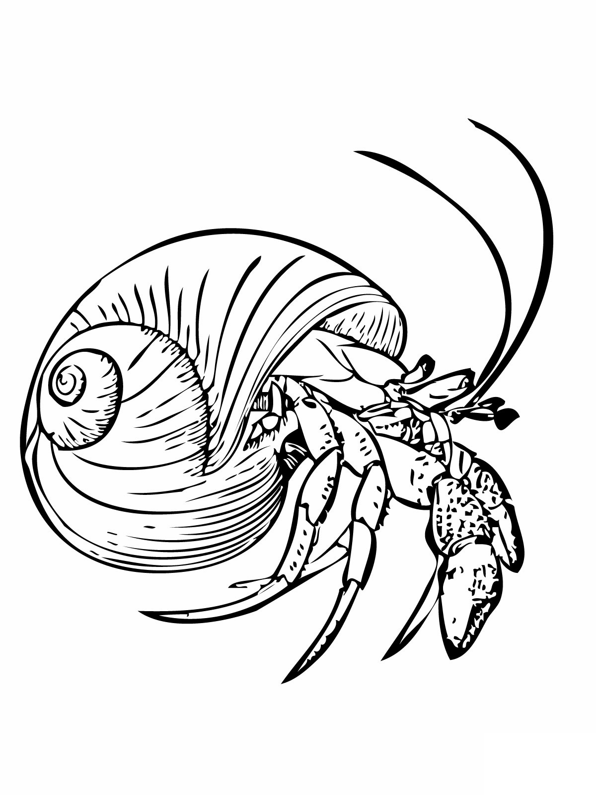 hermit crab coloring page - free printable hermit crab coloring pages for kids