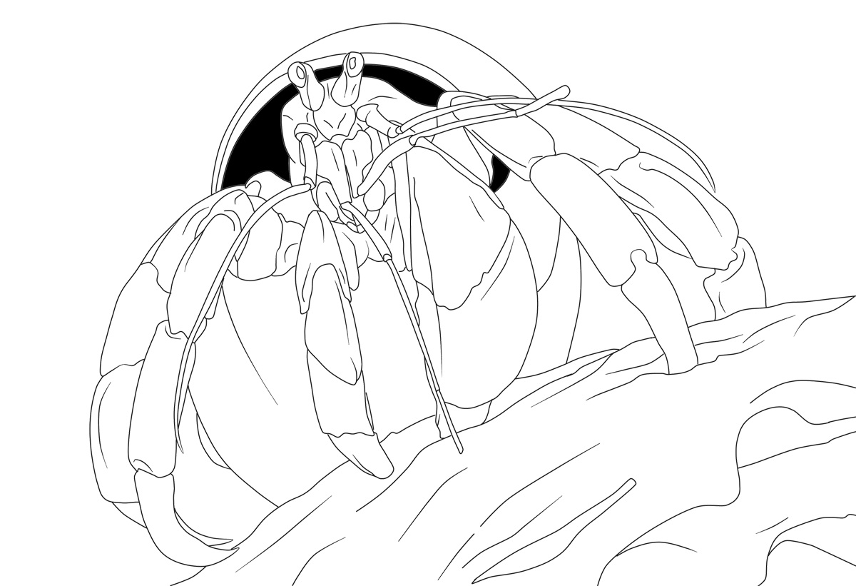 hermit crab coloring pages free printable - Crab Coloring Pages