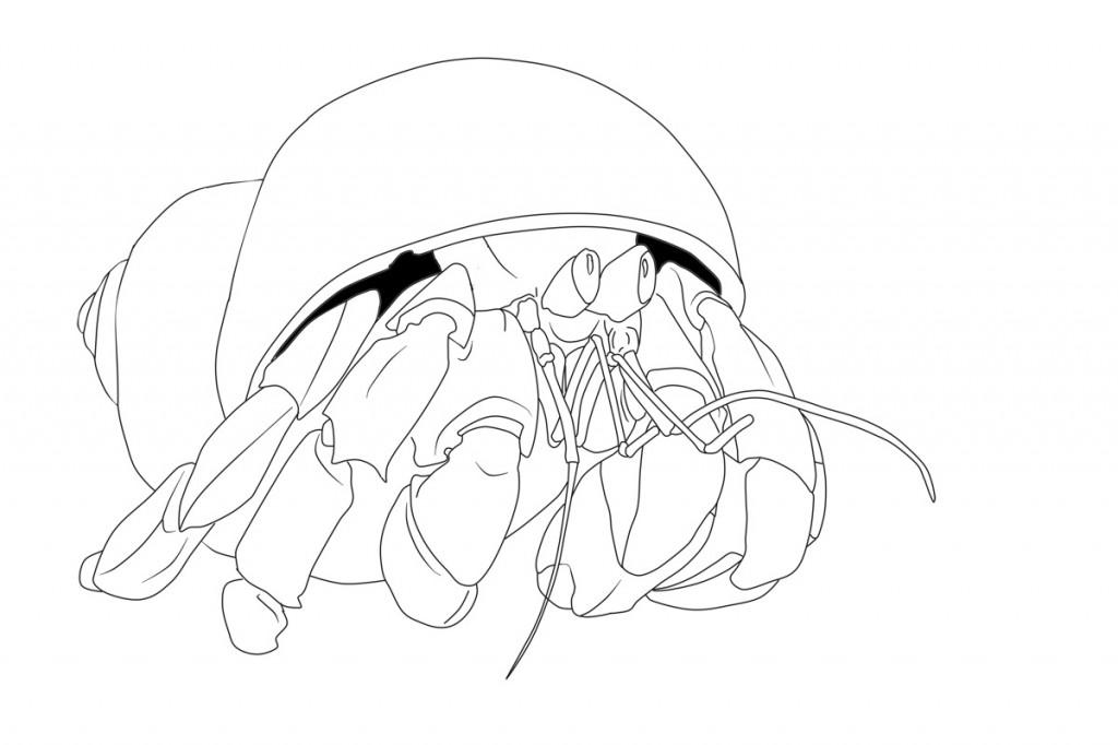Free Printable Hermit Crab Coloring