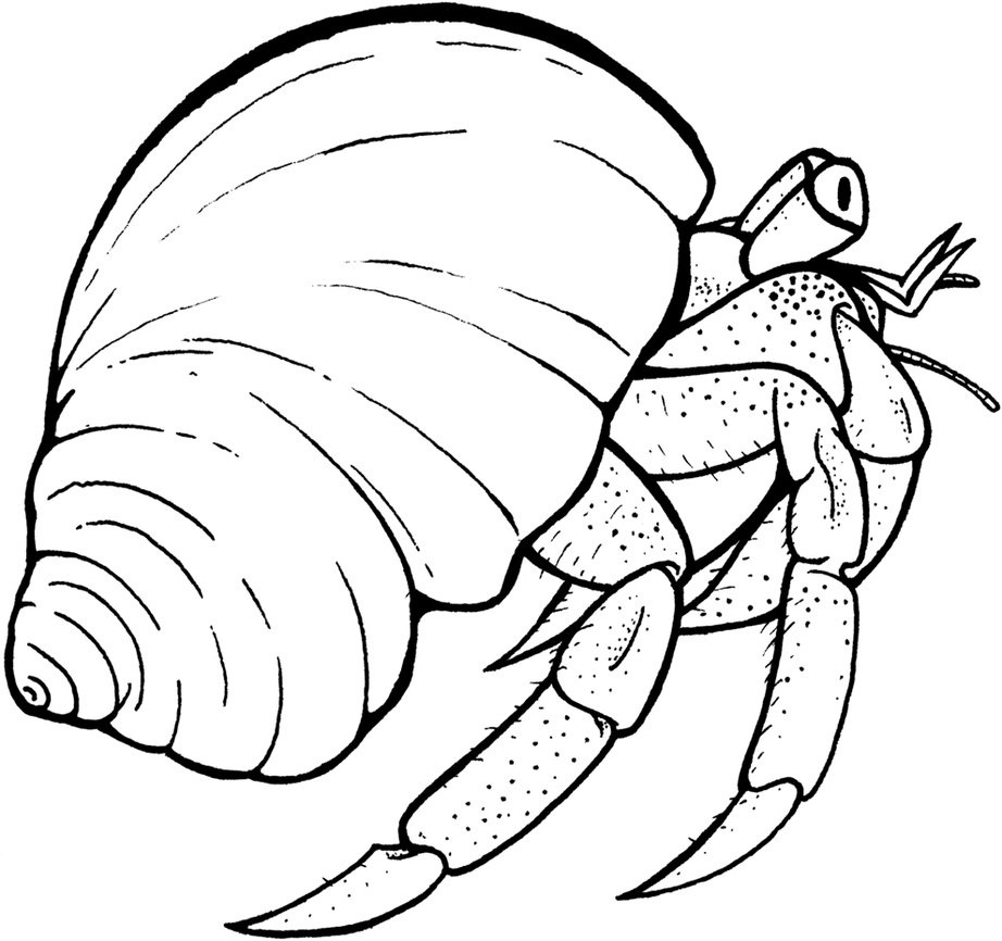 hermit crab coloring pages - Crab Coloring Pages