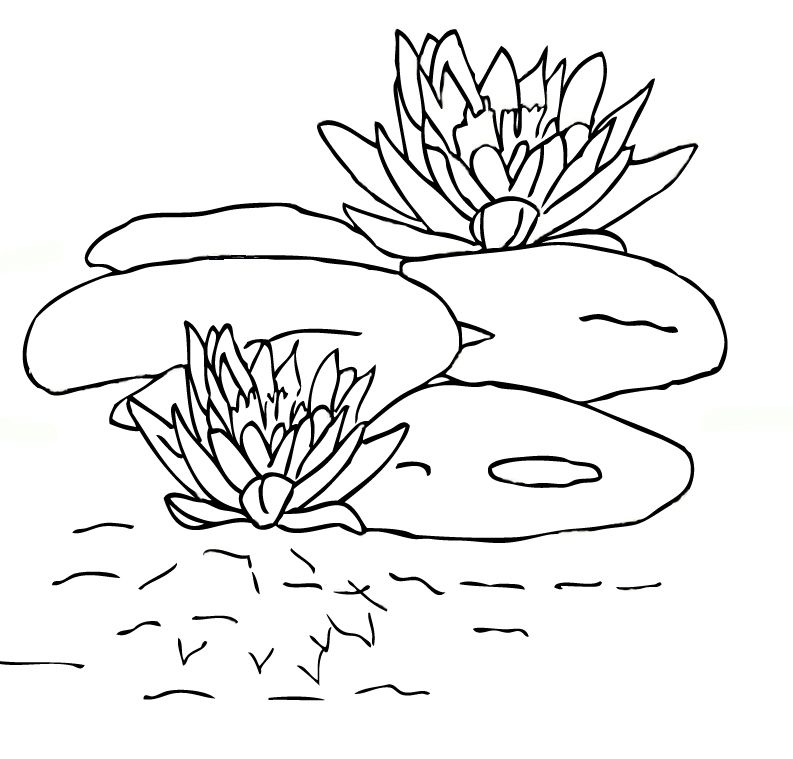 lily pads coloring pages - Coloring Picture For Kids