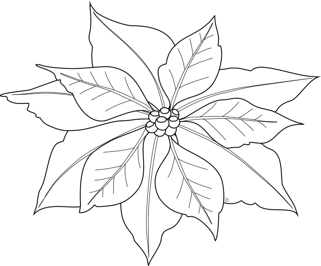 Poinsettia In Spanish Coloring Page