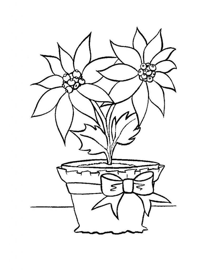 Free Printable Poinsettia Coloring