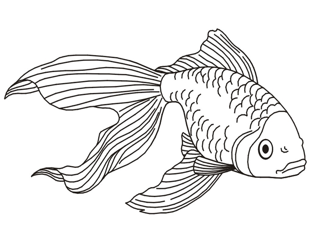 Free printable goldfish coloring pages for kids for Free coloring fish pages