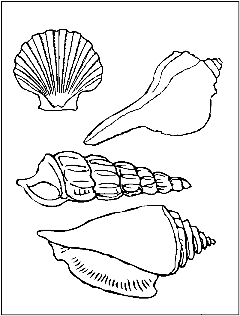 shells coloring page free printable seashell coloring pages for kids