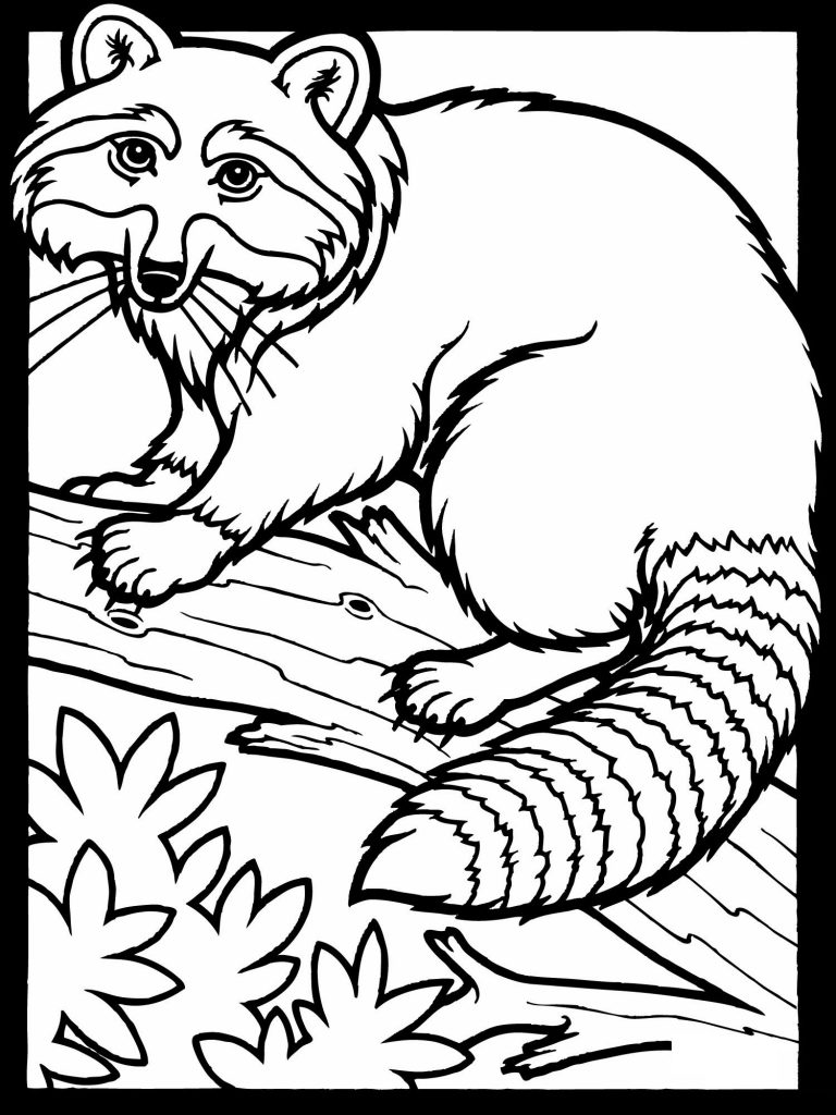 free downloadable coloring pages | Free Printable Raccoon Coloring Pages For Kids