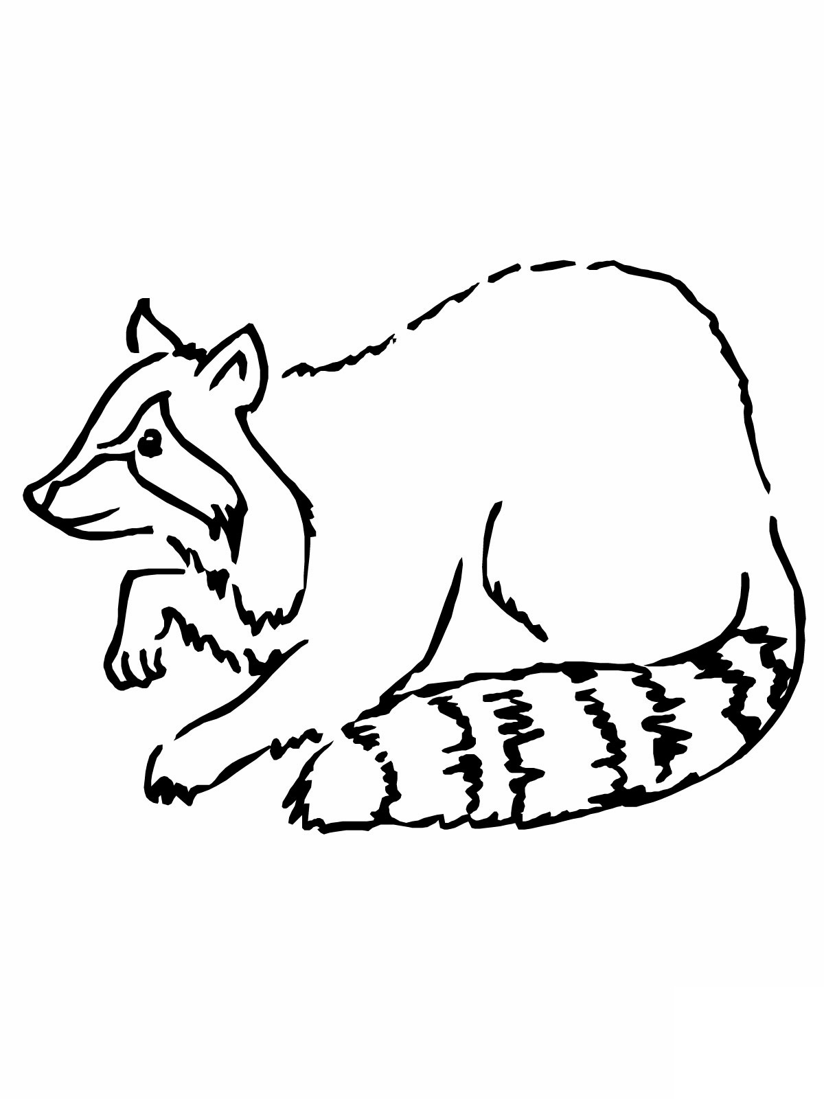 Free Printable Raccoon Coloring