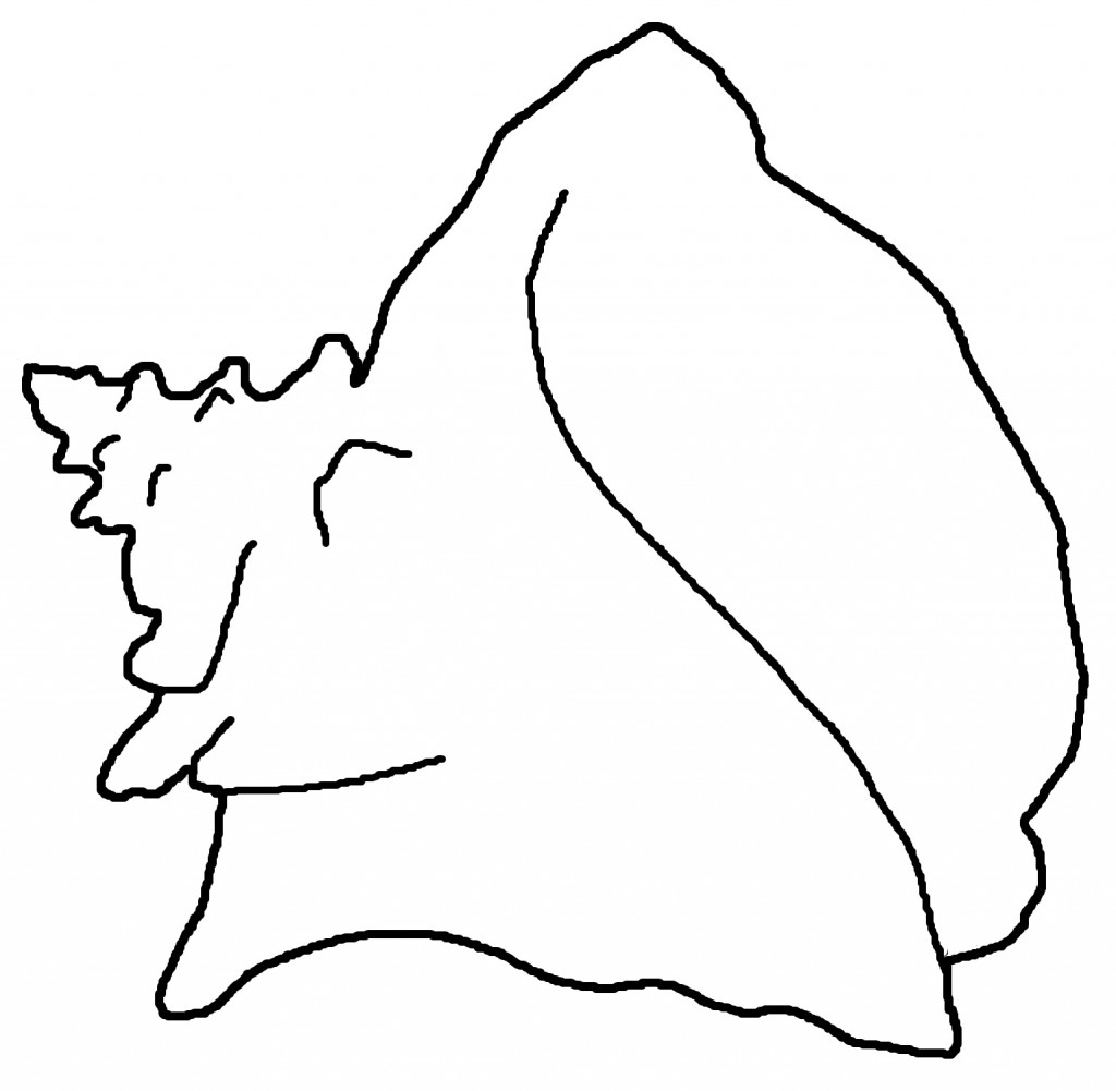 seashell coloring pages - photo#11