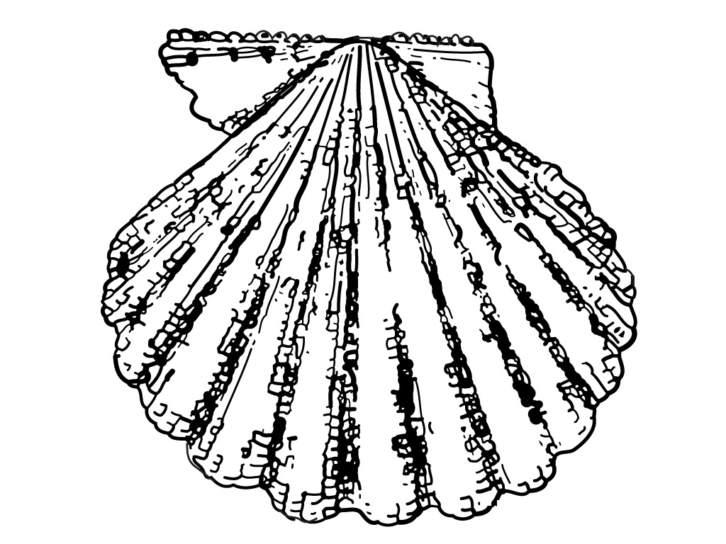 Seashell Coloring Page Pictures