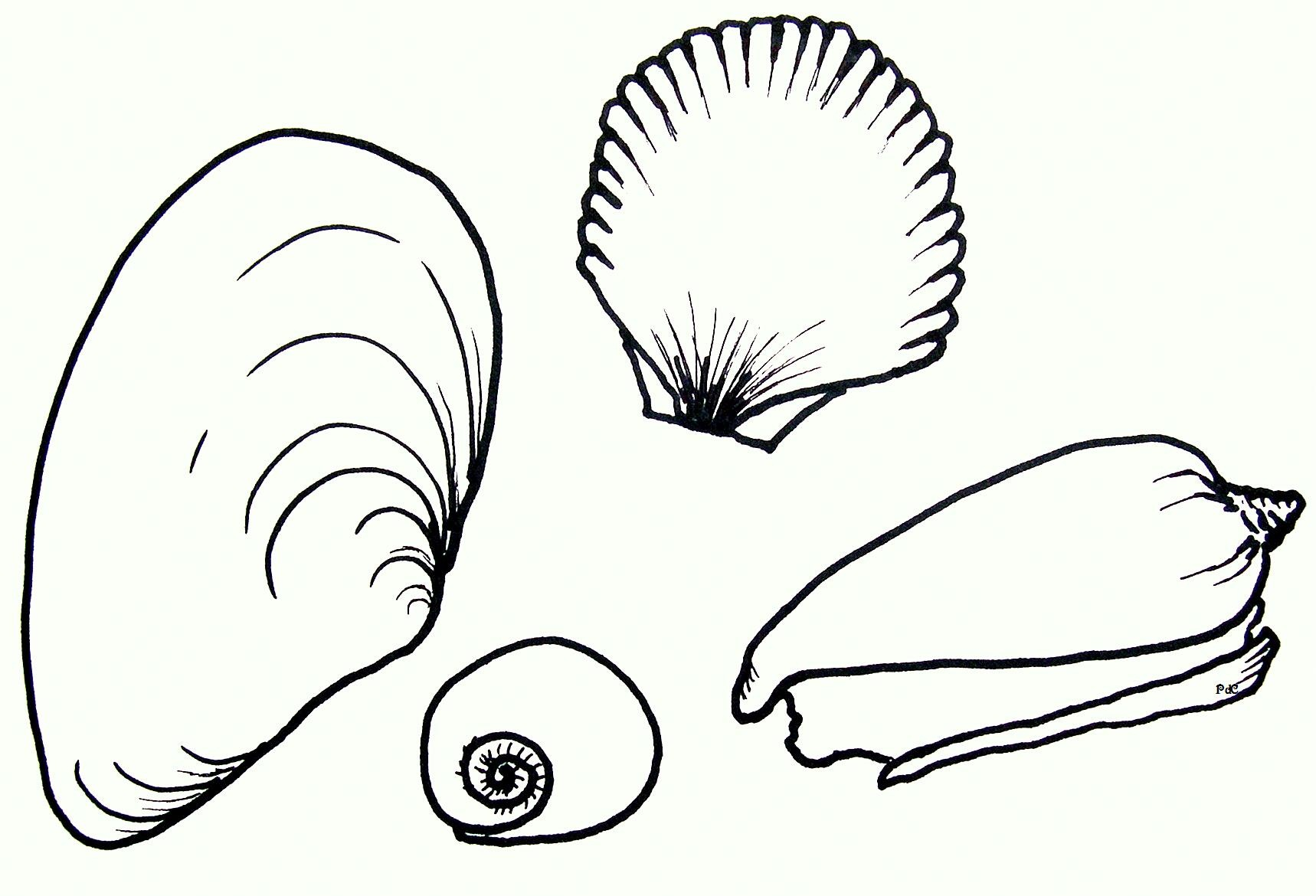 coloring pages of sea shell - photo#21