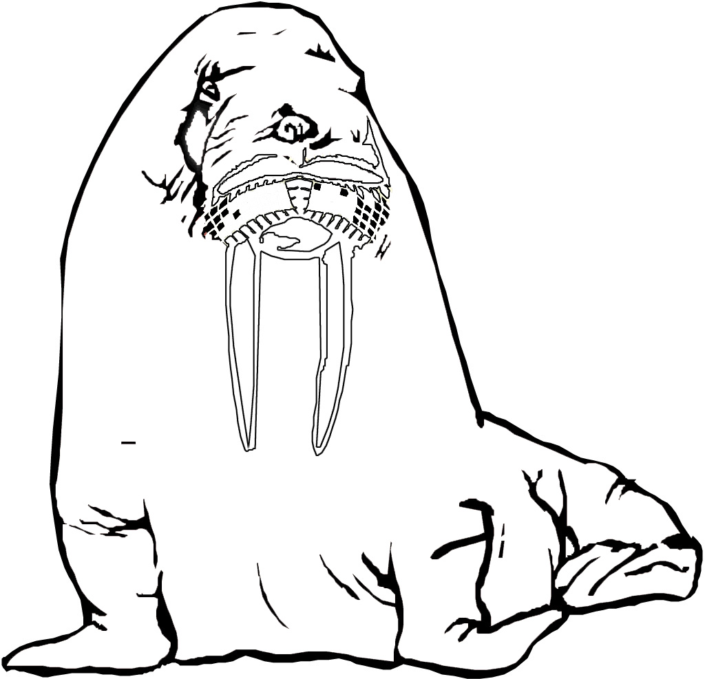 Mammal colouring pages preschool - Walrus Coloring Pages For Kids