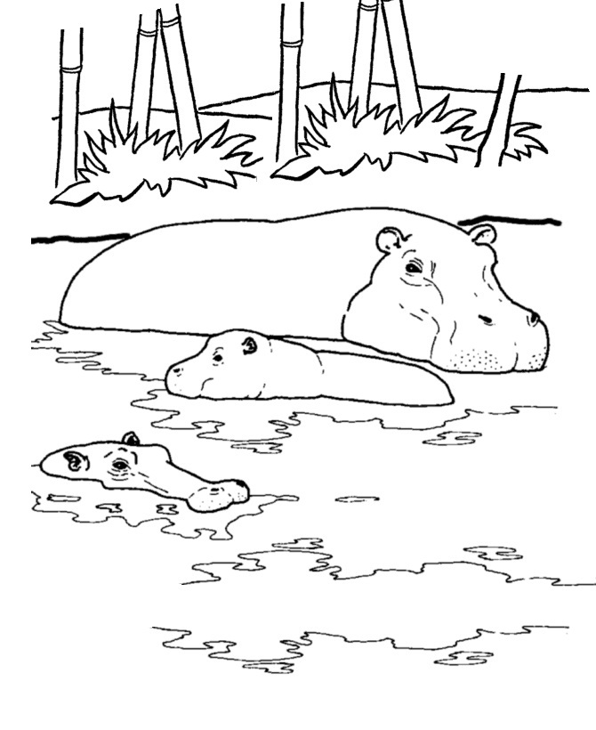 hippo coloring pages printable - Coloring Pages Animals Printable