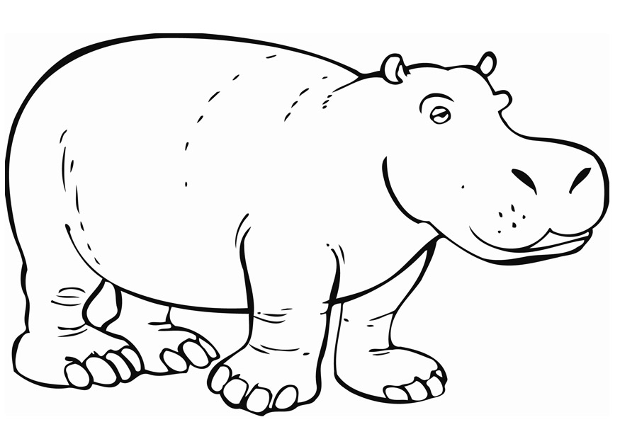 hippopotamus coloring pages to print - photo#1