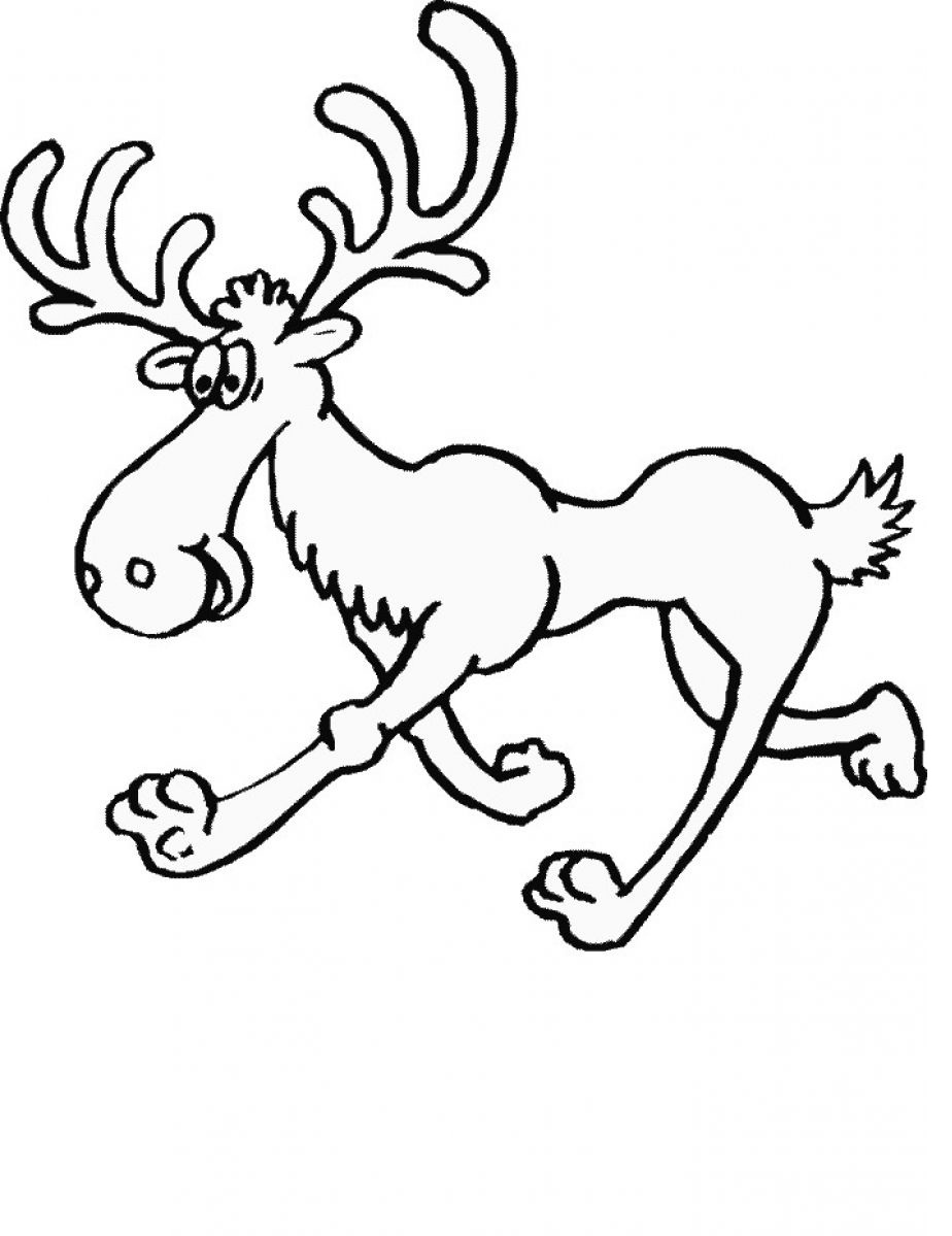 click to see printable version of walking moose coloring page
