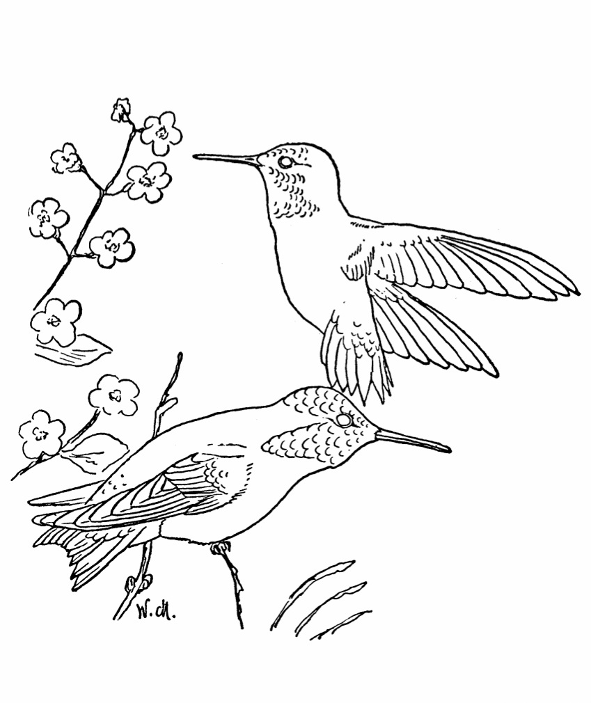 Adult Top Coloring Pages Of Hummingbirds Images best free printable hummingbird coloring pages for kids images