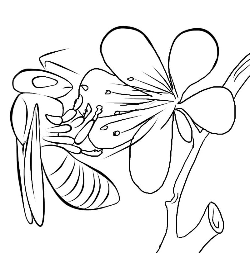 honey bee coloring pages - photo #37